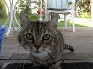 odzwierciedlenie - kot